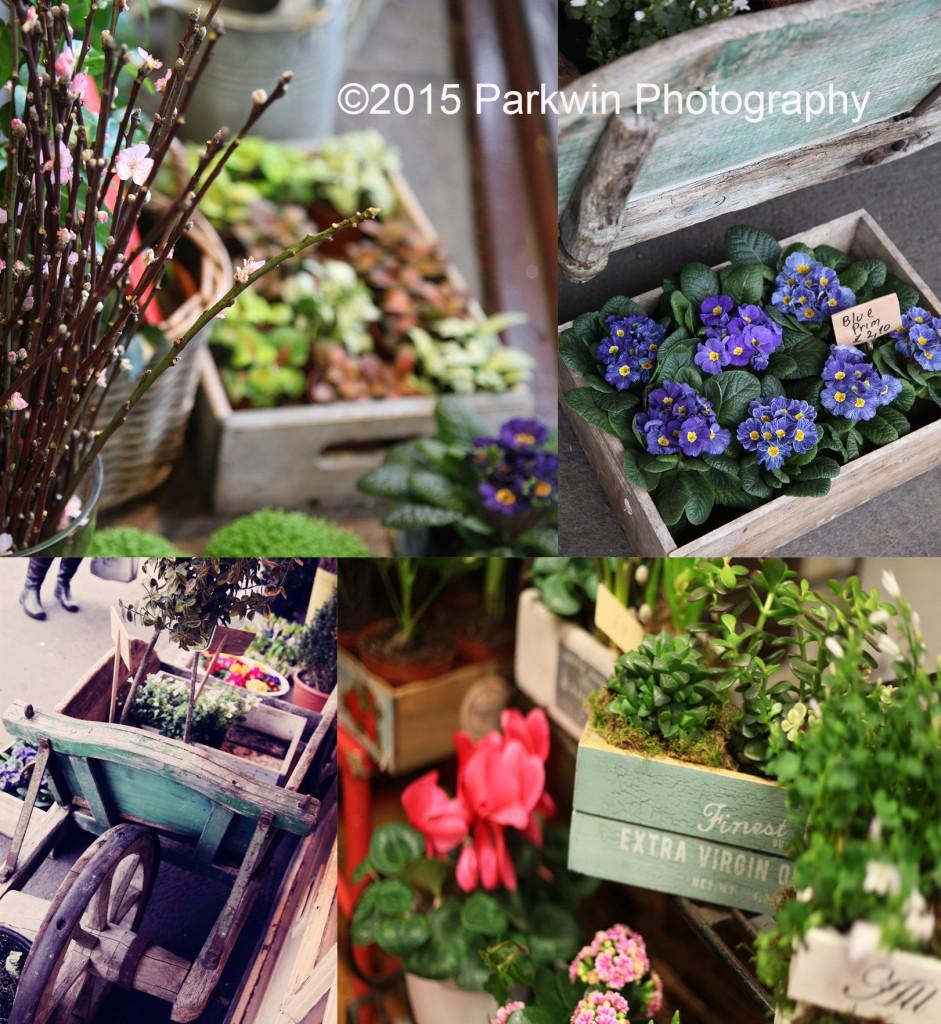 The Flower Shop Bushey display